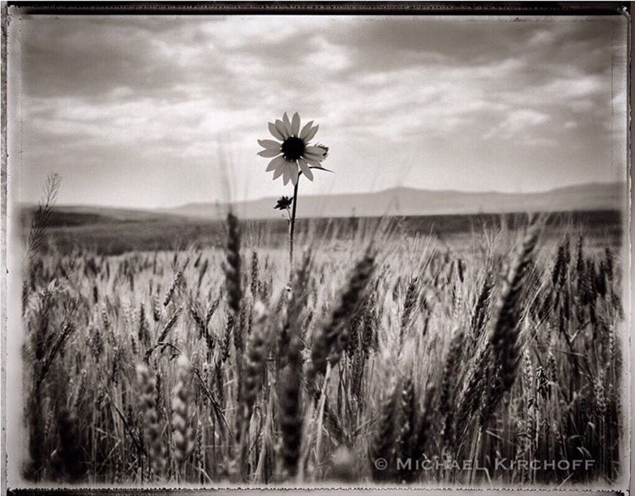 'Sunflower, Colorado' by Michael Kirchoff https://www.instagram.com/p/BLo5kR2lfIl/?taken-by=michaelkirchoff