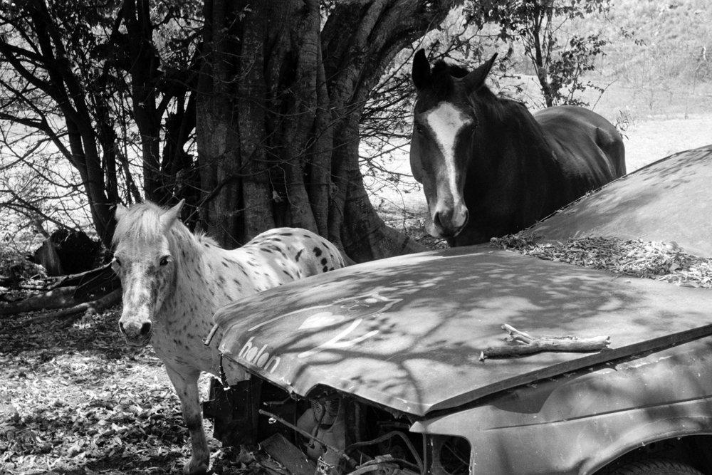 Junkyard Horses