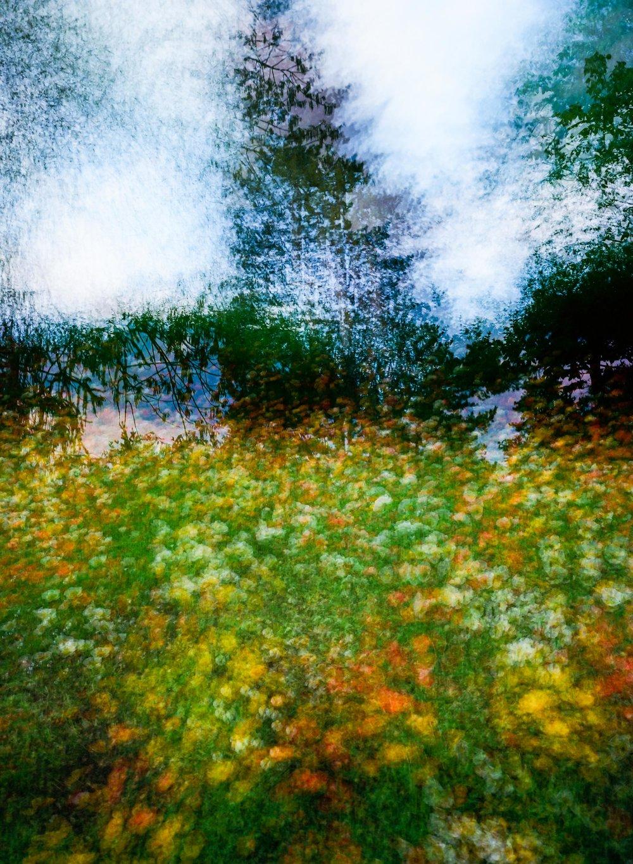 Michael Fauscette | My Flower Dream | Bronica RF-645 | Zenzanon RF 65mm f4 | Kodak Ektar 100