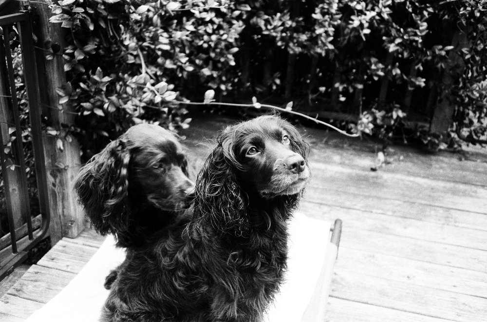 Izzie and Wren 2 | Olympus Infinity Stylus | Arista EDU Ultra 400 | Adrian Douglas Gilliam