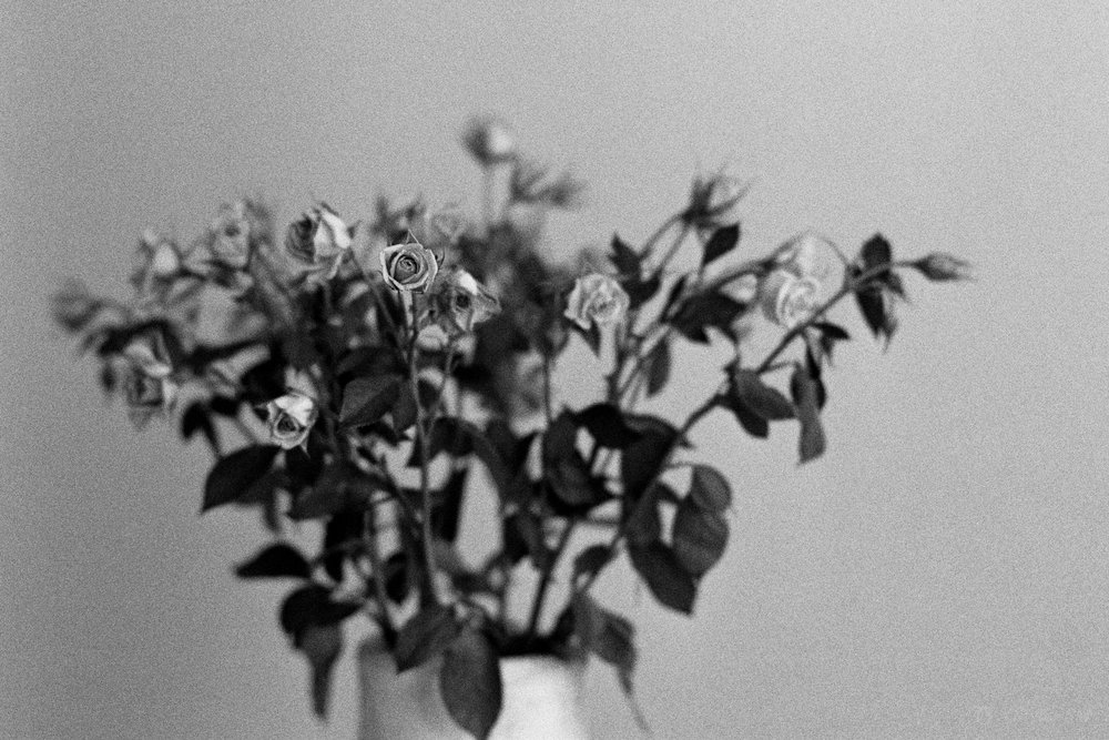 Standing out from the Crowd | Voigtländer Bessa R3M | Zeiss 50mm 1.5C Sonnar T* | Kodak T-Max 400