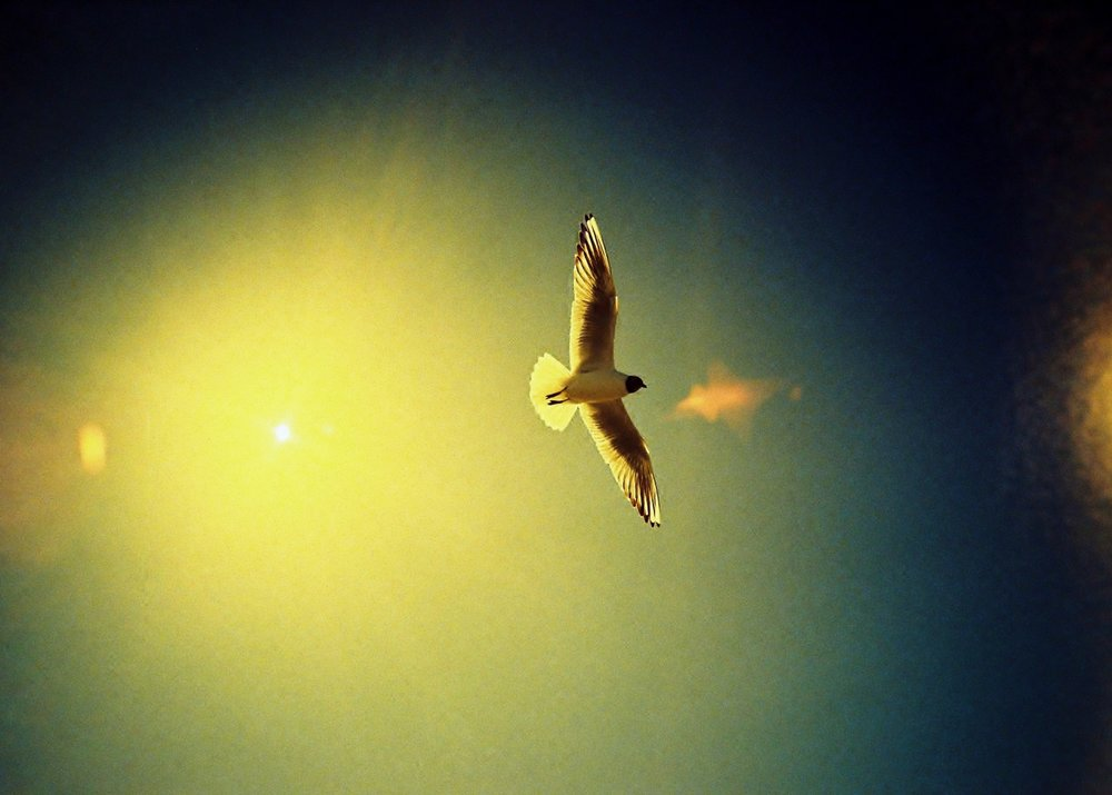 Wings Are Wide, Olympus XA, Kodak Elitechrome, xpro