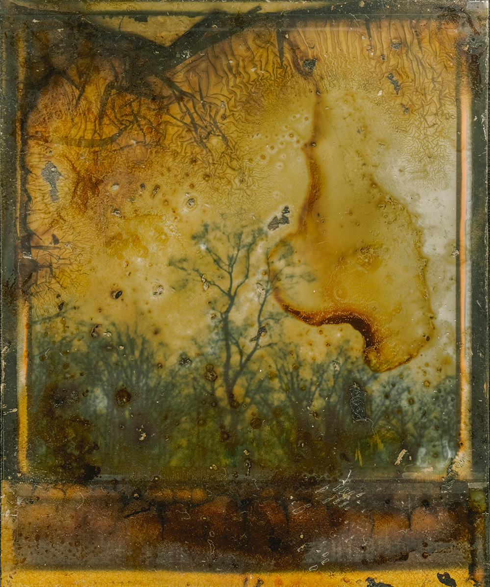 Yellow Tree | Polaroid SX70 | Impossible Color, manipulated | Jean Francois Flamey