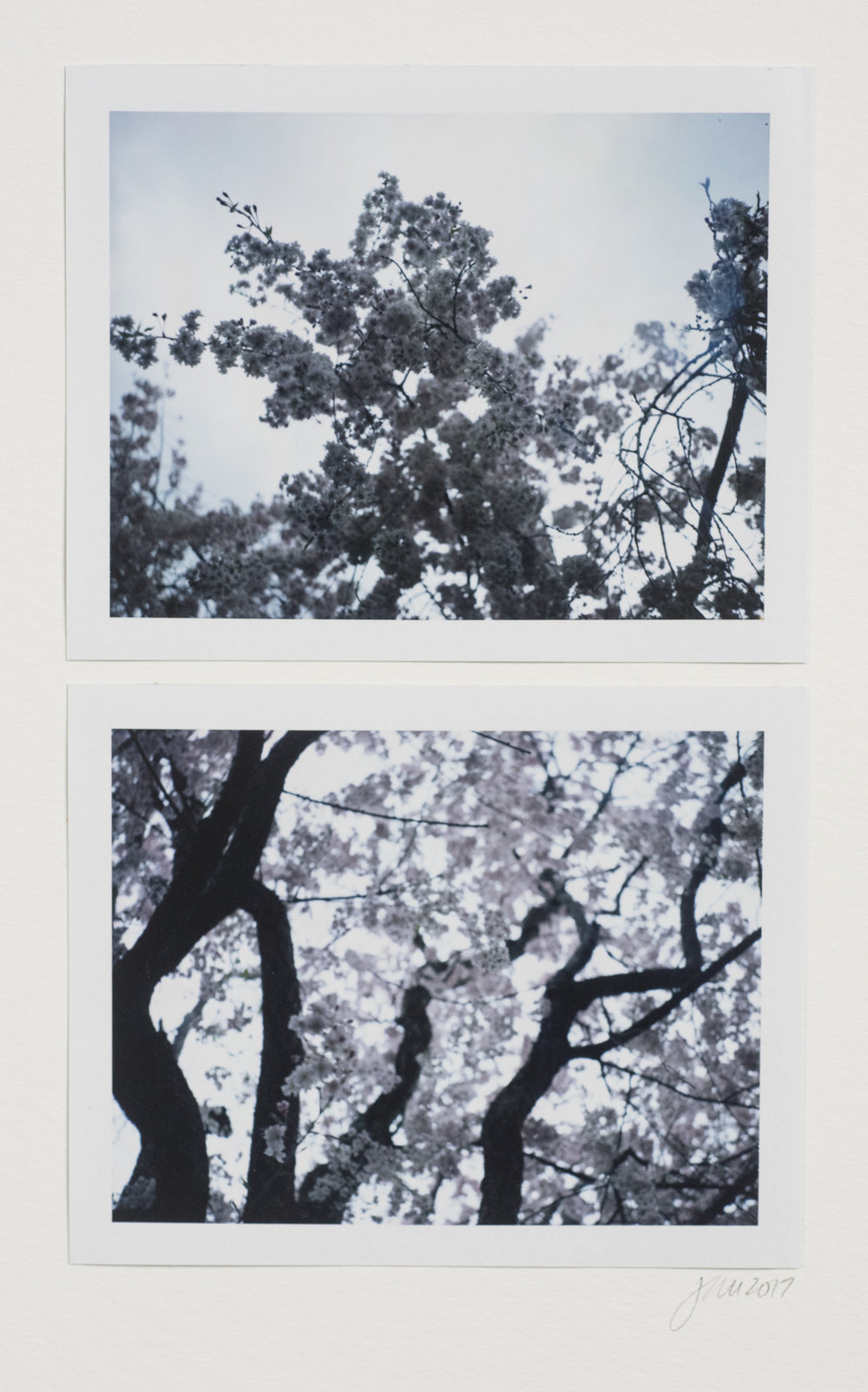 Weeping From Below | Polaroid Land Camera Auto 100 | Diptichon Paper | Jocelyn Mathewes