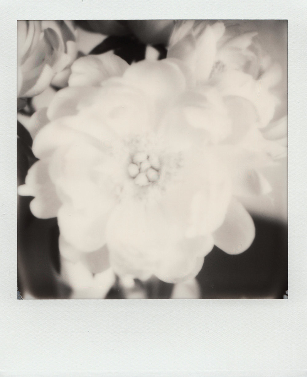 Peonies | Polaroid SX70| Impossible Project 70 Black & White Film | Ioana Taut