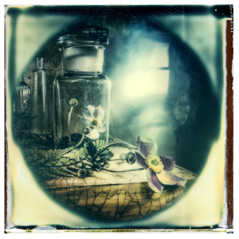 Unititled | Polaroid SX&) | Impossible Project 70 Color Film | Graeme Webb
