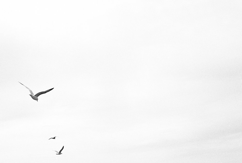 Three Gulls | Nikon F100 | 50mm F 1.8D | Ilford HP5 | Louis Sousa