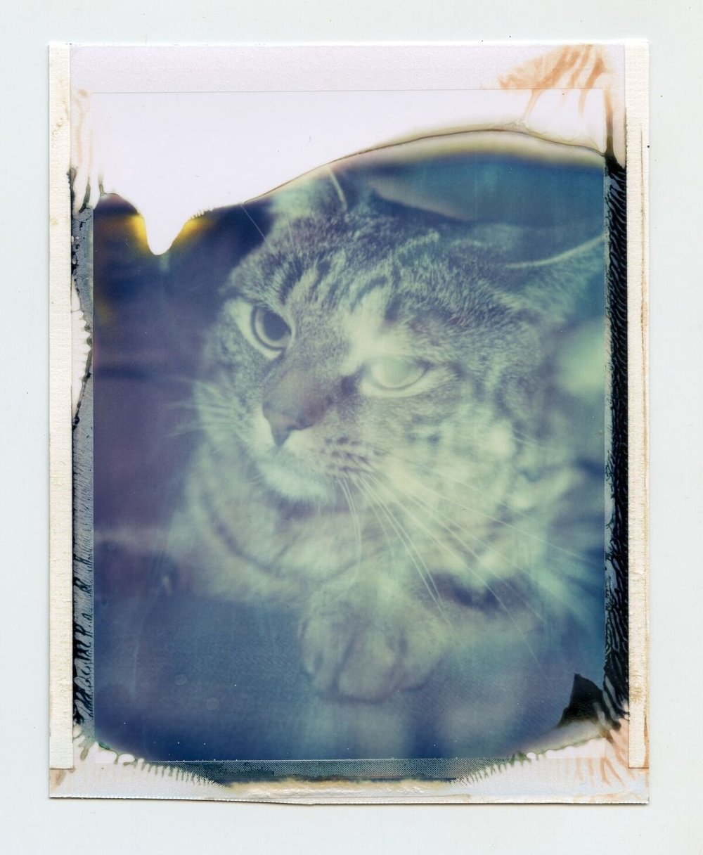 Andrew the Cat | Polaroid 180 | Polaroid 669 film | Blair Daffy