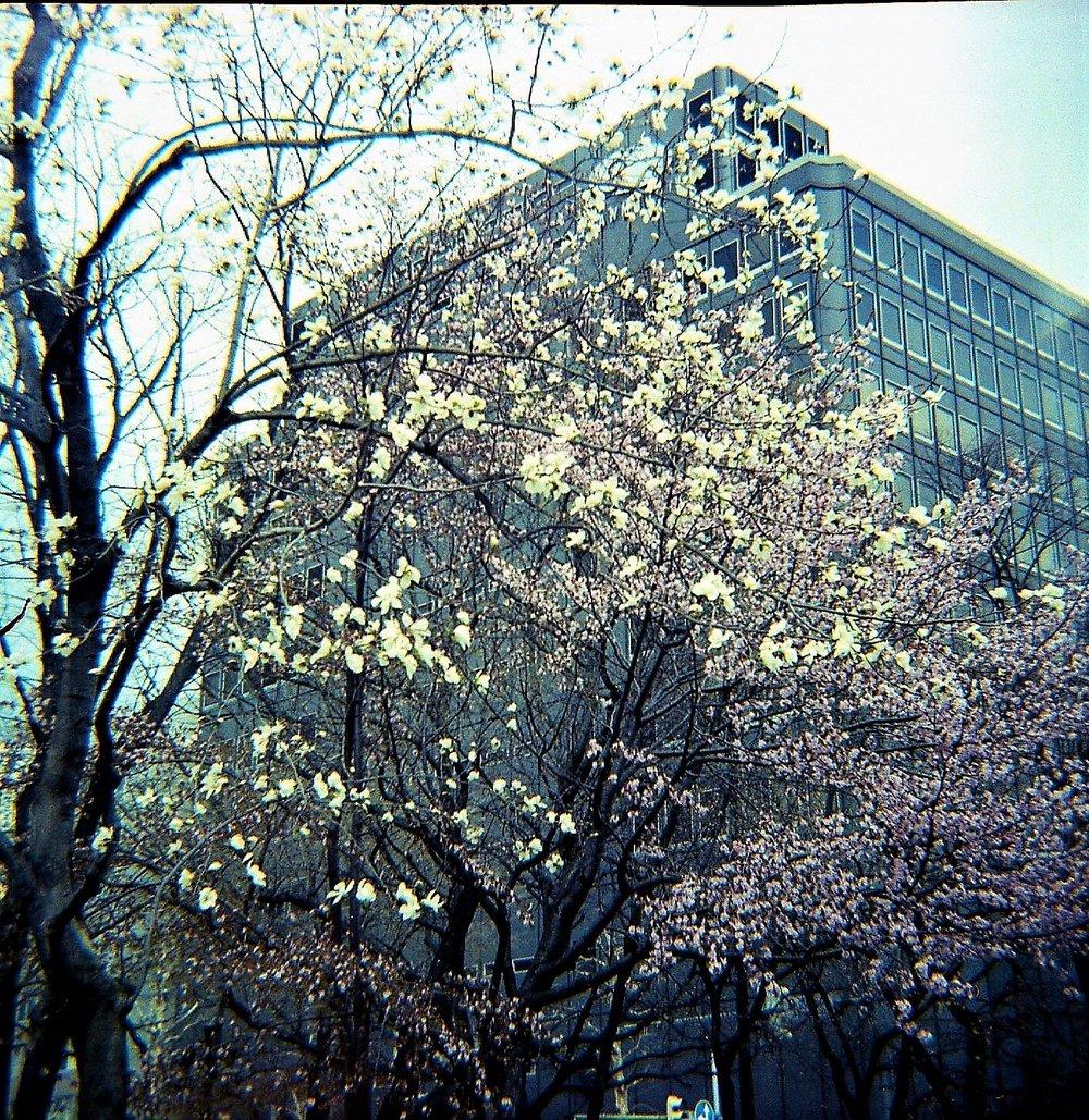 Sapporo Spring | Diana F+ | Portra 100 | Barbara Murray