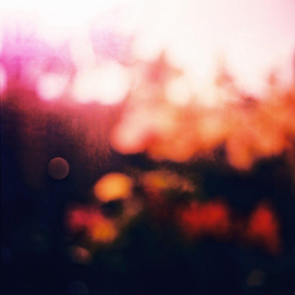 Snoozing In My Garden | Diana F+ | Lomo 300 | Lucy Wainwright