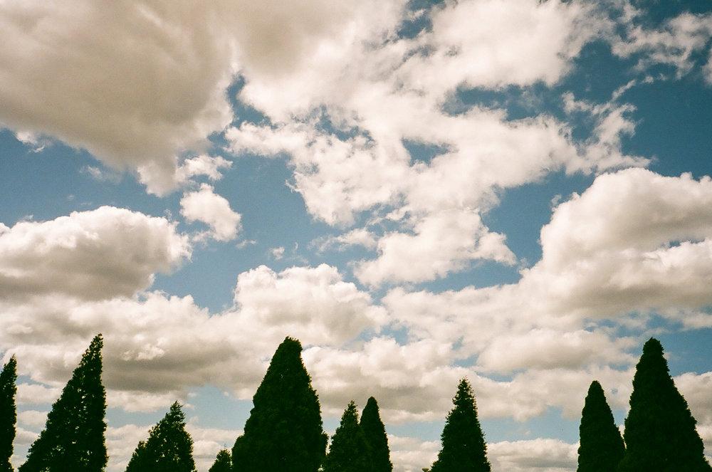 Look Up | Olympus Stylus Epic | Fujicolor Superia Reala 100 | Jane McLoughlin