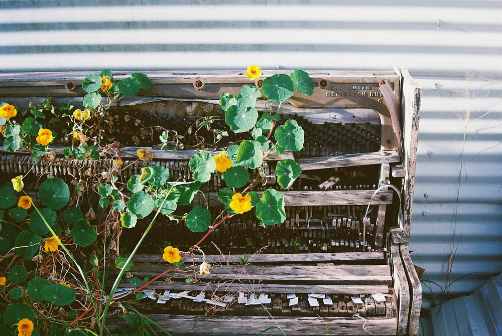 Riordan Dose | Piano With Flowers_Canon EOS 500 | Kodak Ultramax 400