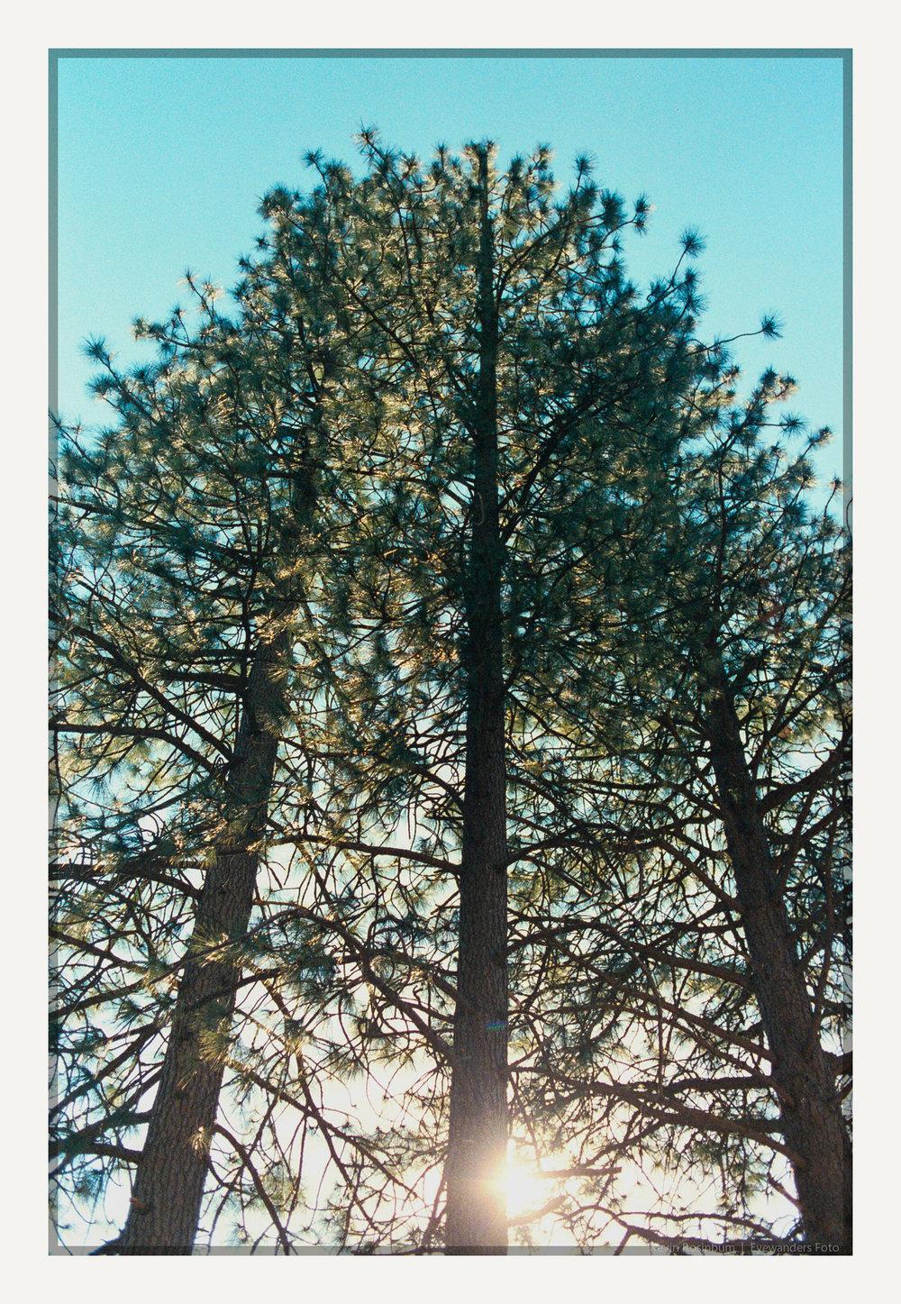pillars | Pentax MZ3 35mm | Lomo F2 400 | Kevin Rosinbum