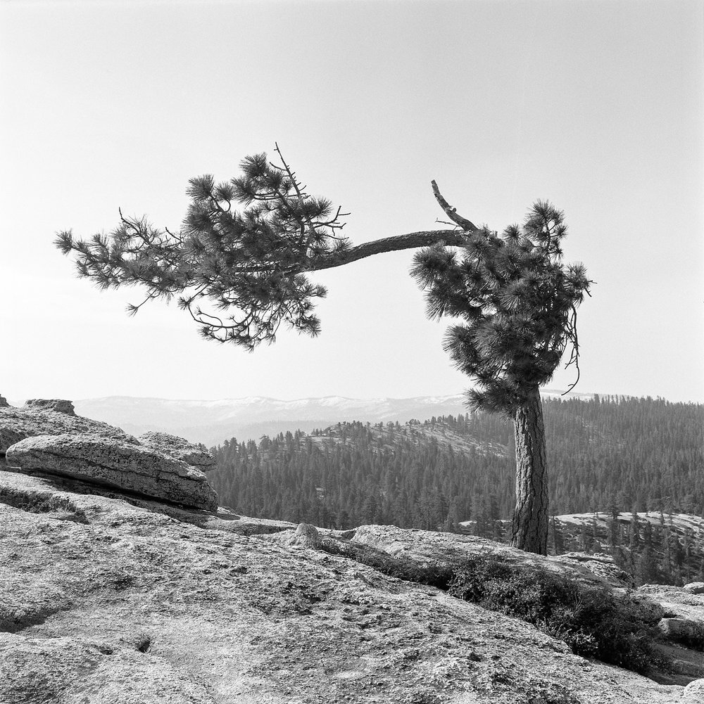 The Other Tree | Yashica Mat 124G | Fuji Acros | Gabi Roozee