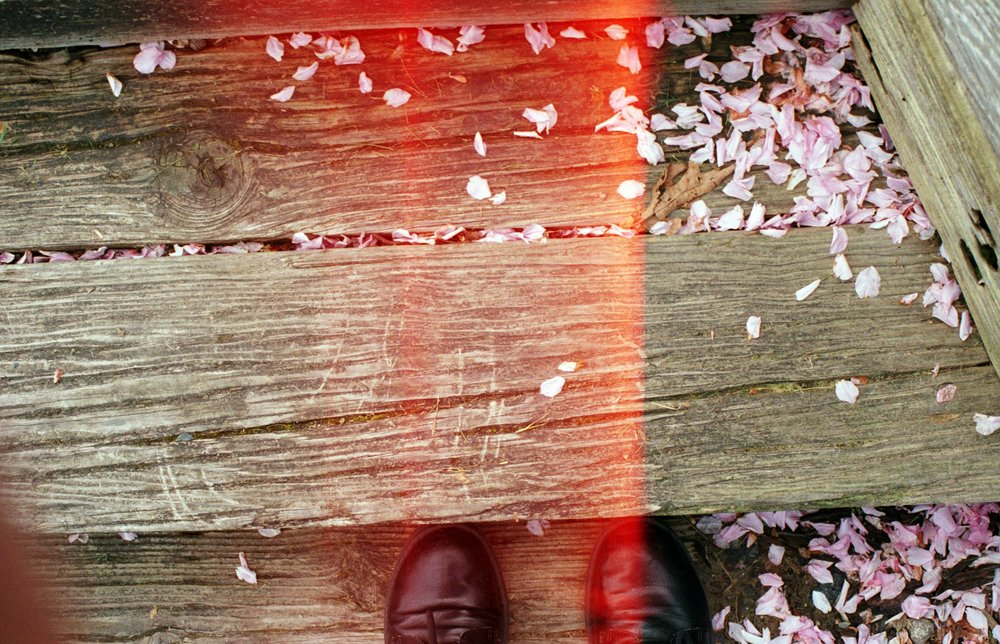 Spring Walk | Canon AE1 | 50mm f/1.4 | Agfa Vista 200 | Katt Janson Merilo