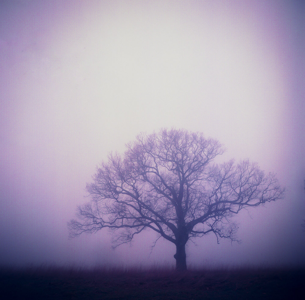 In The Electric Mist With The Confederate Dead | Yashica Mat 124G | Fuji HG 400, expired 1997 @ ISO 100 | James Thorpe