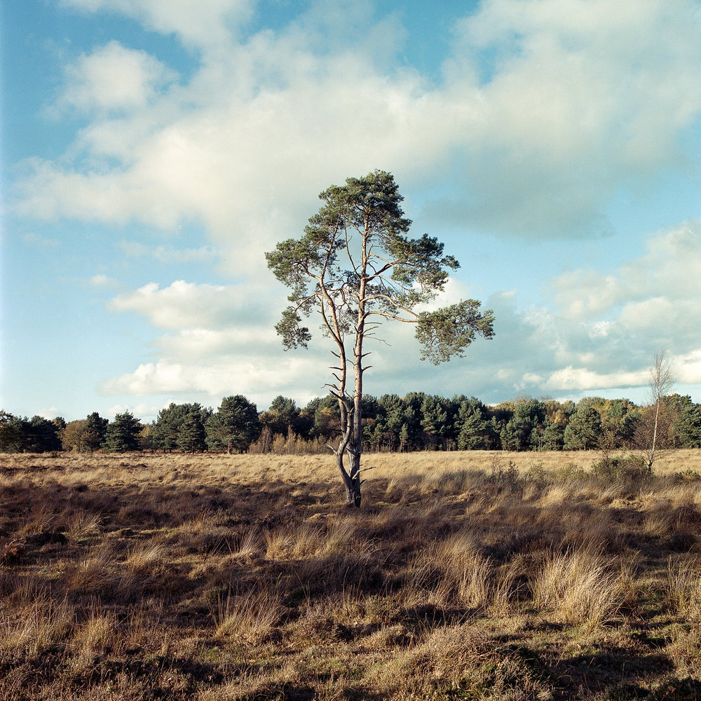 Skipwith Common | Hasselblad | 60mm | Portra 400 | Mark Hillyer