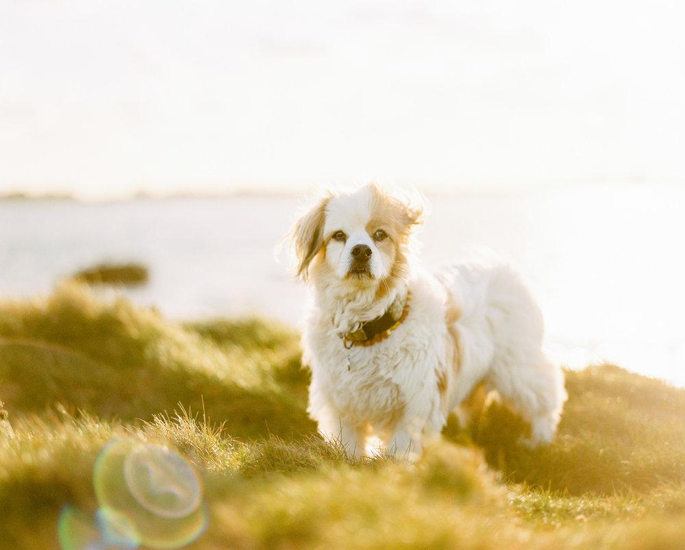 Nils Karlson | Rüdiger - the original landscape dog | Mamiya RZ67  | Portra 400