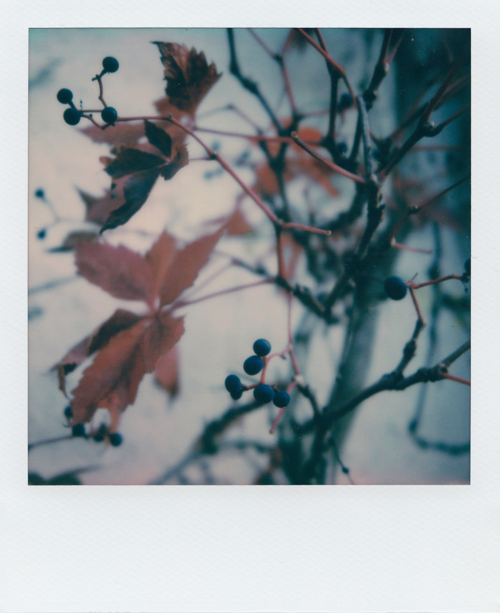 Falling for Fall | Polaroid SX70 | Impossible Colour | Ioana Tăut