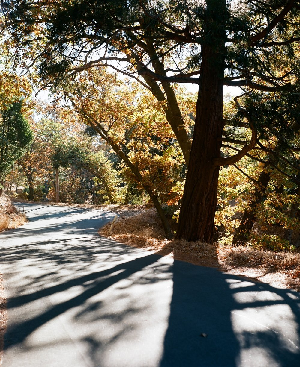 Crestline, California_Mamiya Super 23, 3.5f=100m_Kyle Everett Smith_11.jpg