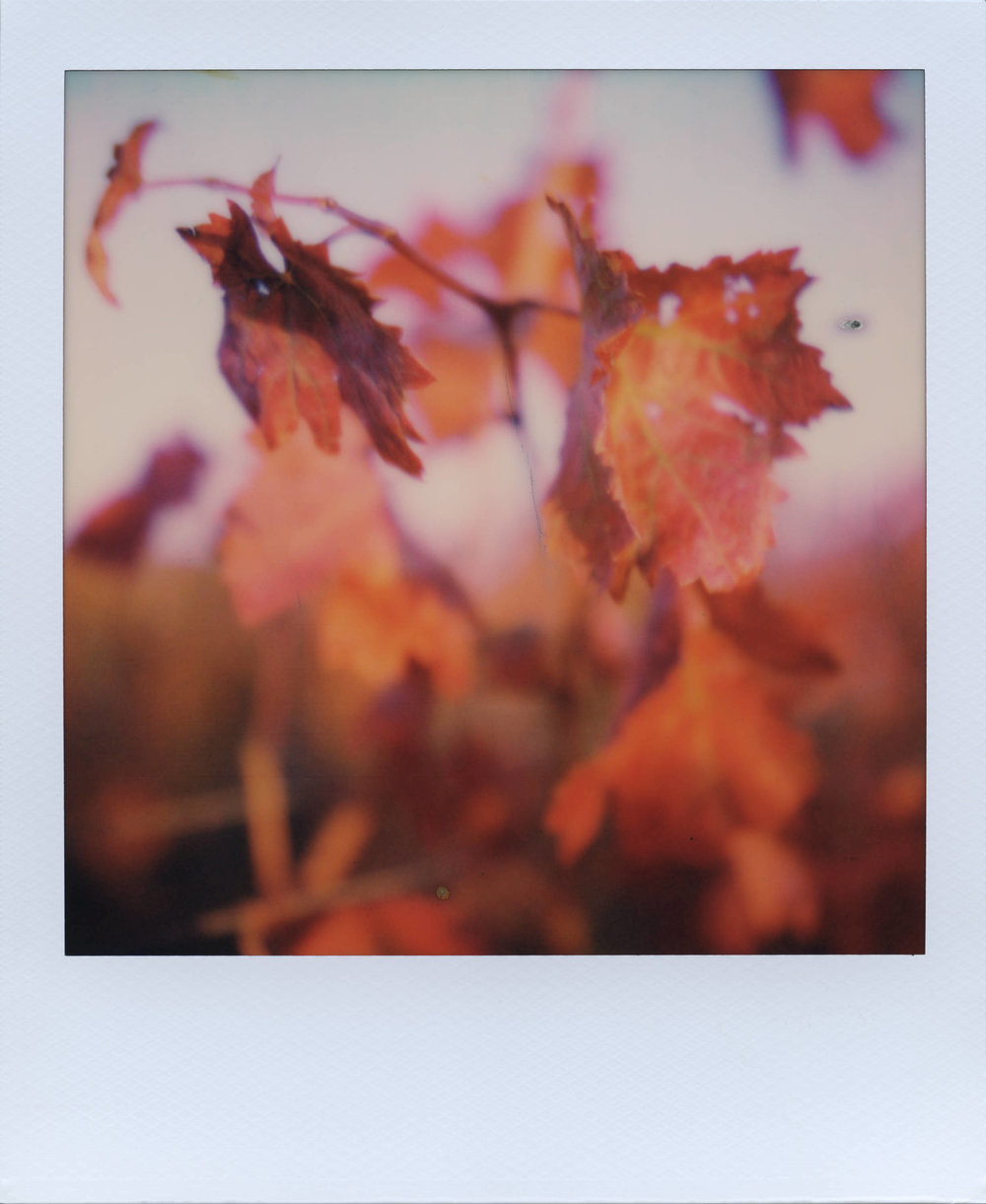 This Is Happening | SX-70 | POS SX-70  | Ale Di Gangi