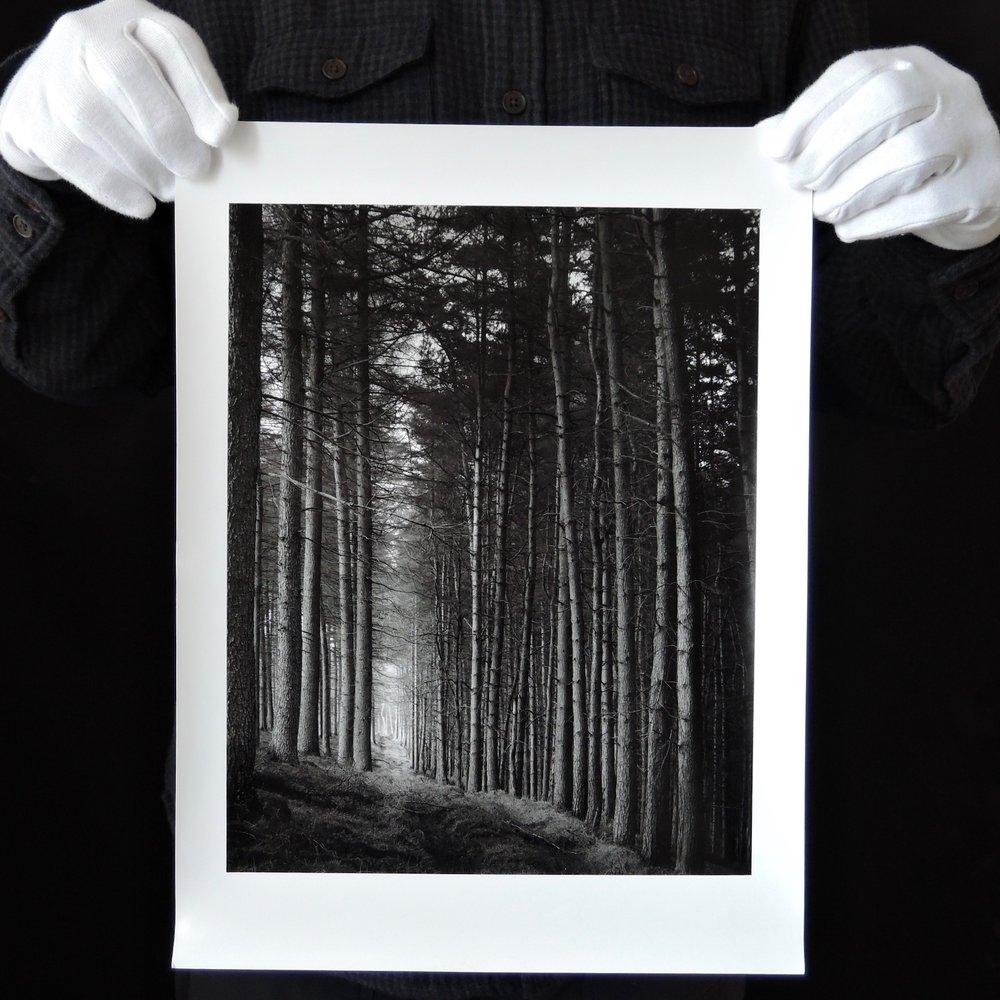 Paul Hart | Portal | Arca Swiss 5x4 300 mm