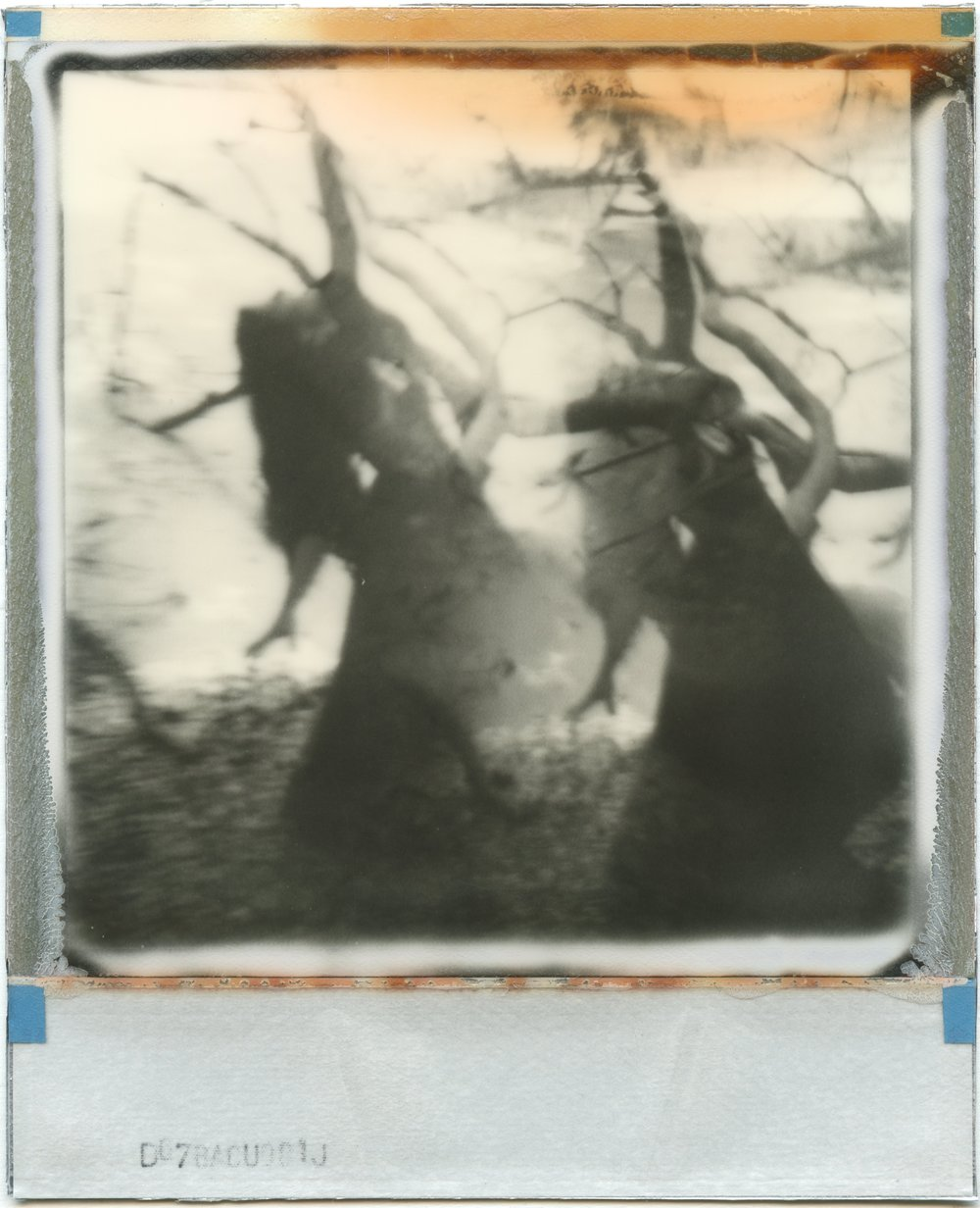 She's Lost Control | Polaroid SLR680 | Impossible Project PX600 B/W | Julia Beyer