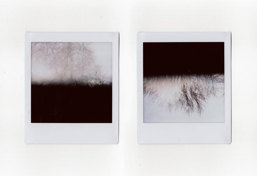 Woods | Lomo Square | Fuji Instax Square | Claudio Gomboli