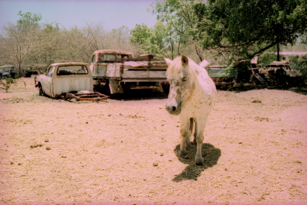 Junkyard Pony | Leica M3 | E100 in C41 | Greg Williamson