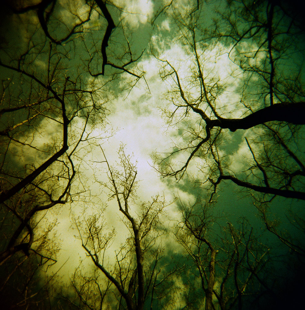 Up | Holga 120N | Greg Cleroux