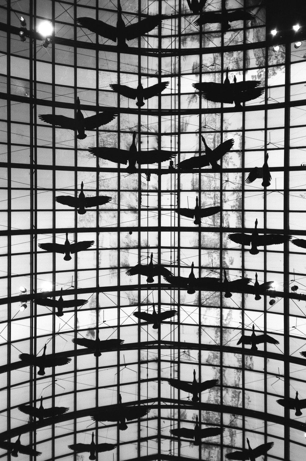 Untitled | Minolta AF-C |Ferrania P30 | A. Gammell