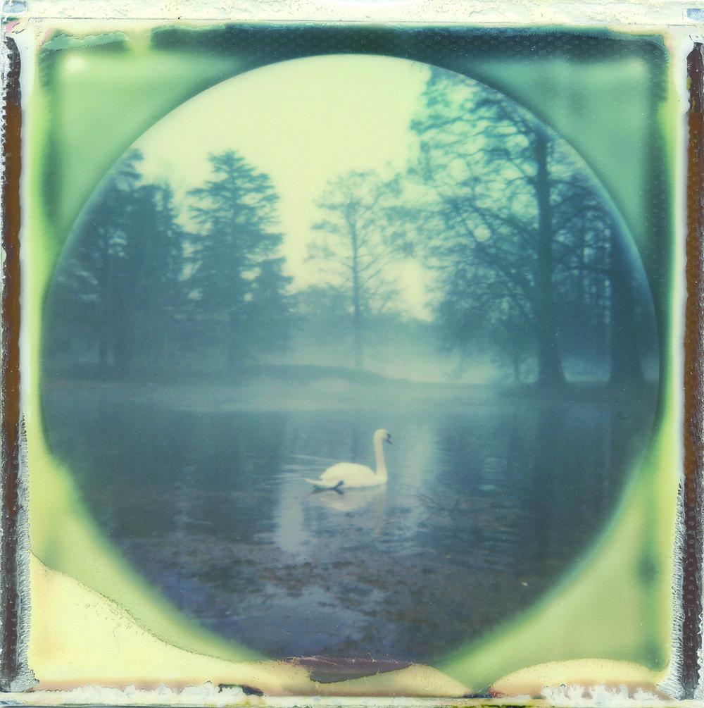 Spring Grove Cemetary | Nikita Gross