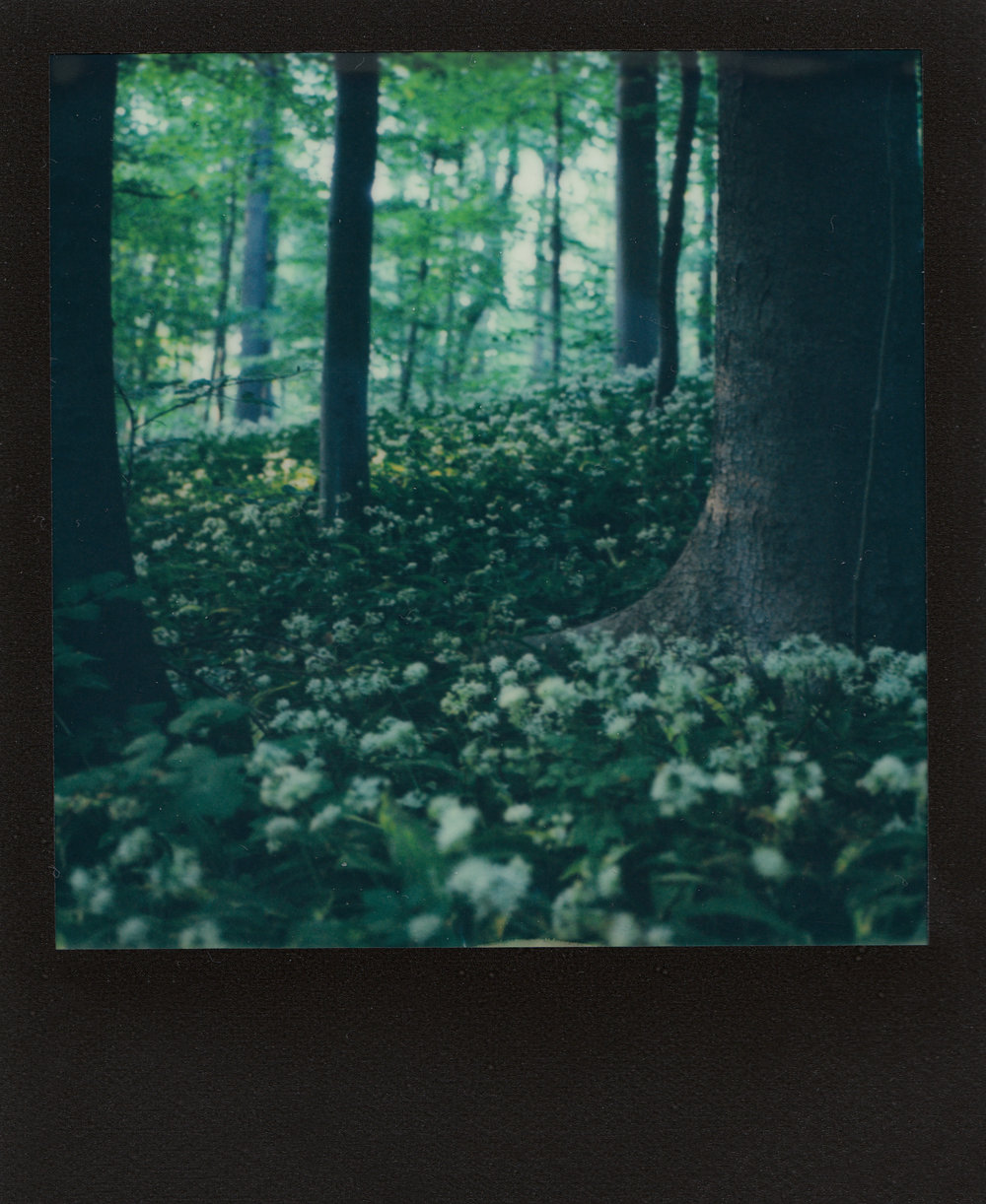 Something Out Of A Fairytale | Polaroid Land Camera SX-70 | Impossible Project Expired 600 | Ioana Taut