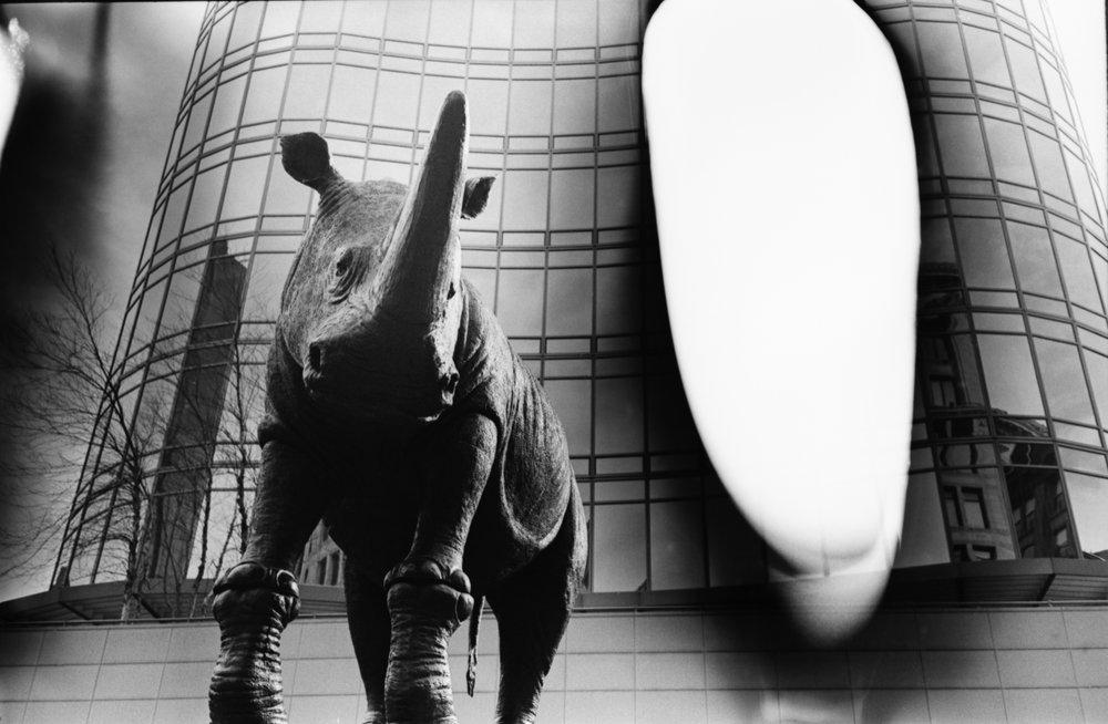 Rhino | Rollei 35s | Kodak XX | Colin Poellot