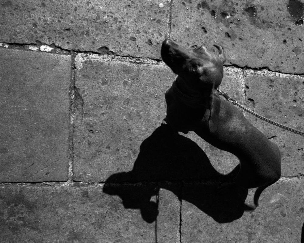 Dachshund | Efrain Bojorquez