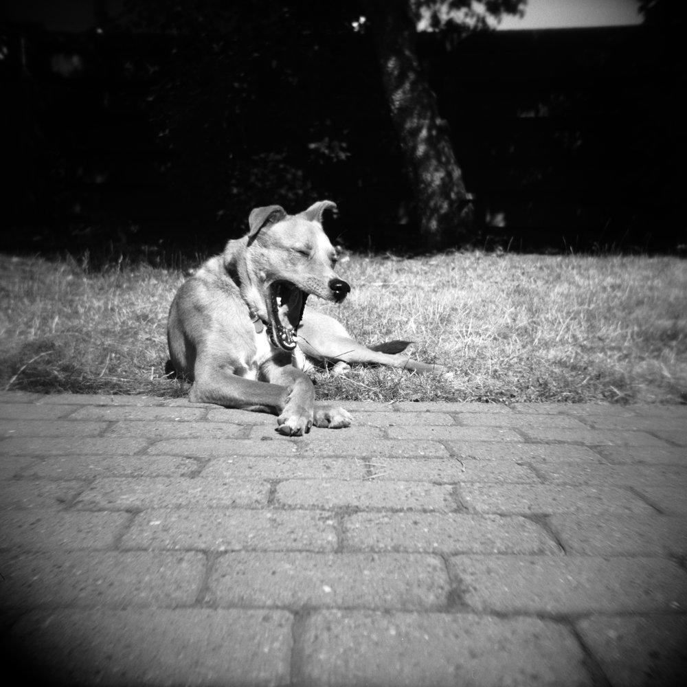 Mumford2 | Katt Janson Merilo