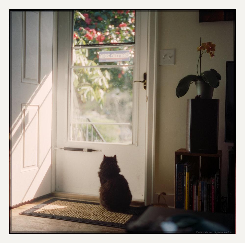Longing Georgie | Kevin Rosinbum