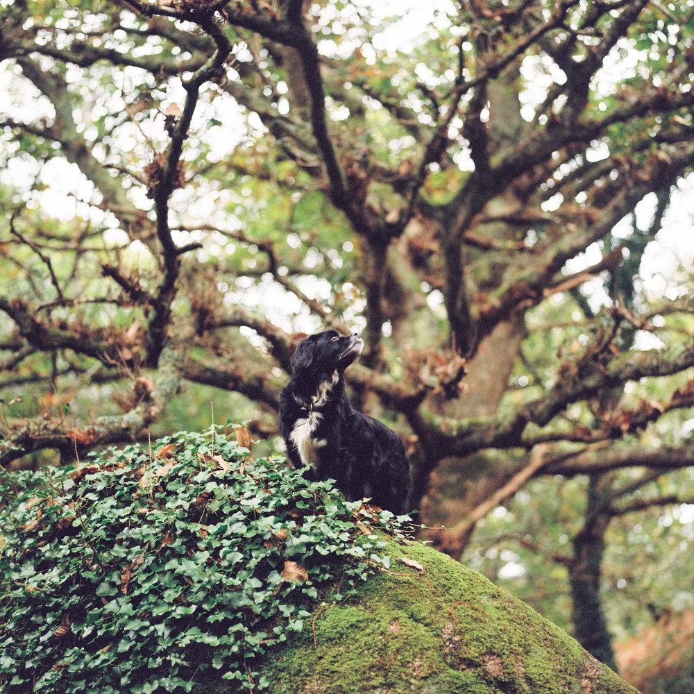 Romeo the Mountain Goat | Nils Karlson