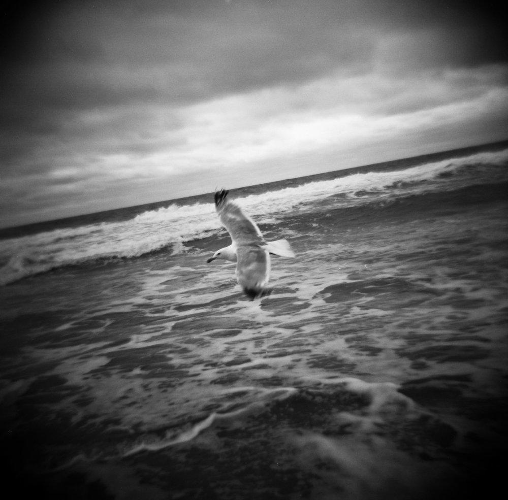 Jeff Bosie | Beach Haven NJ