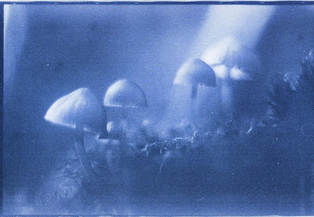 Mystic Mushrooms | Fujica ST701 | AGFA CT18 | Kali Herdman