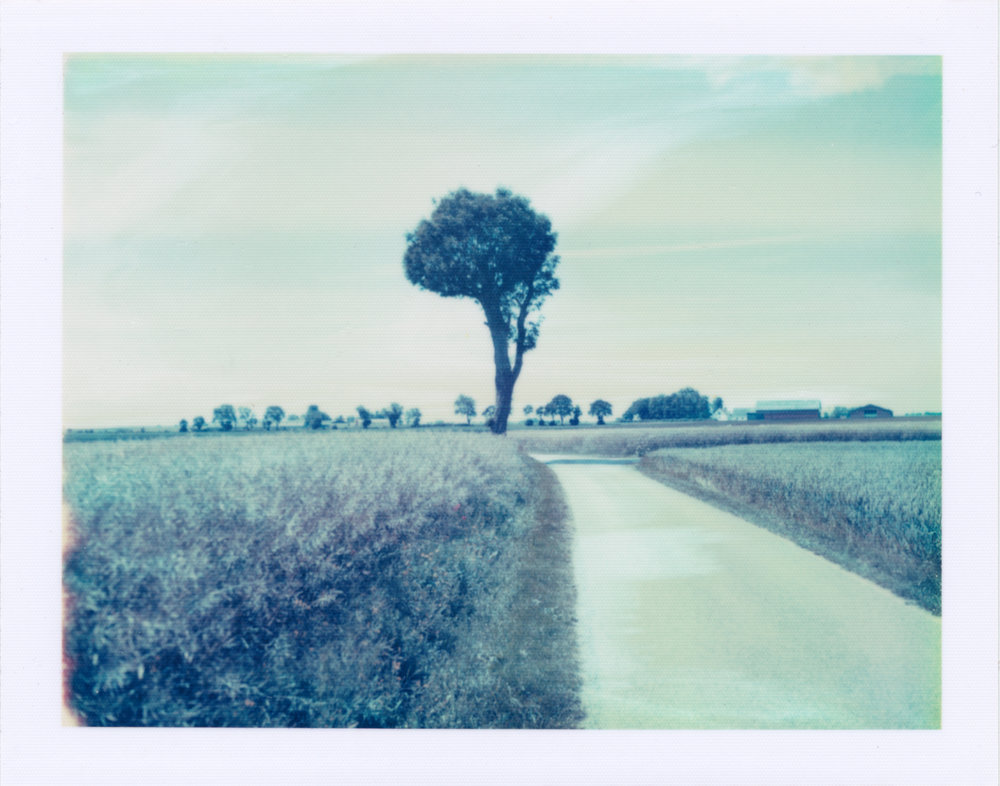Field Road Tree | Polaroid 195 | Polaroid 669 | Per Forsström