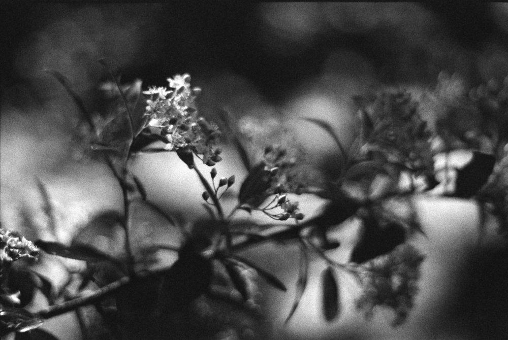 Funeral Flowers | Minolta Dynax 7 | Stig Starr