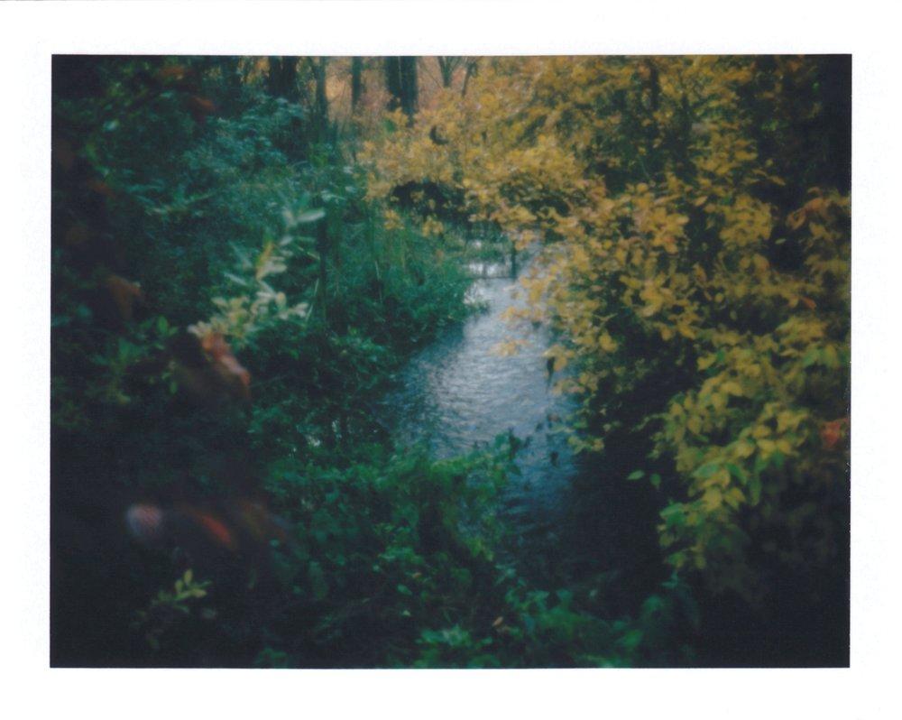 Autumnal | Polaroid Automatic 230 | Kenneth Johnson