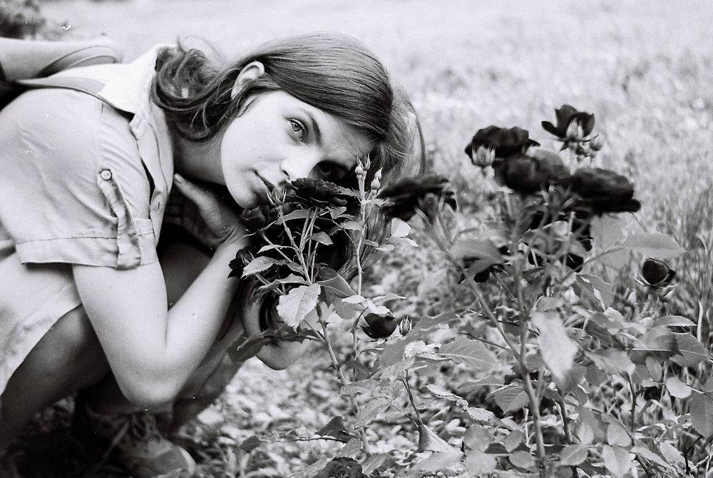 Haile Halassie | roses