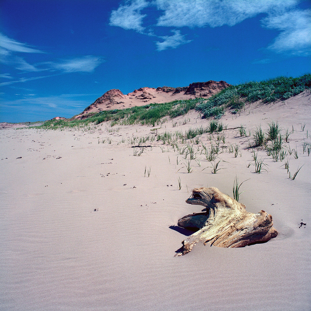 Howard Sandler   Brackley Beach