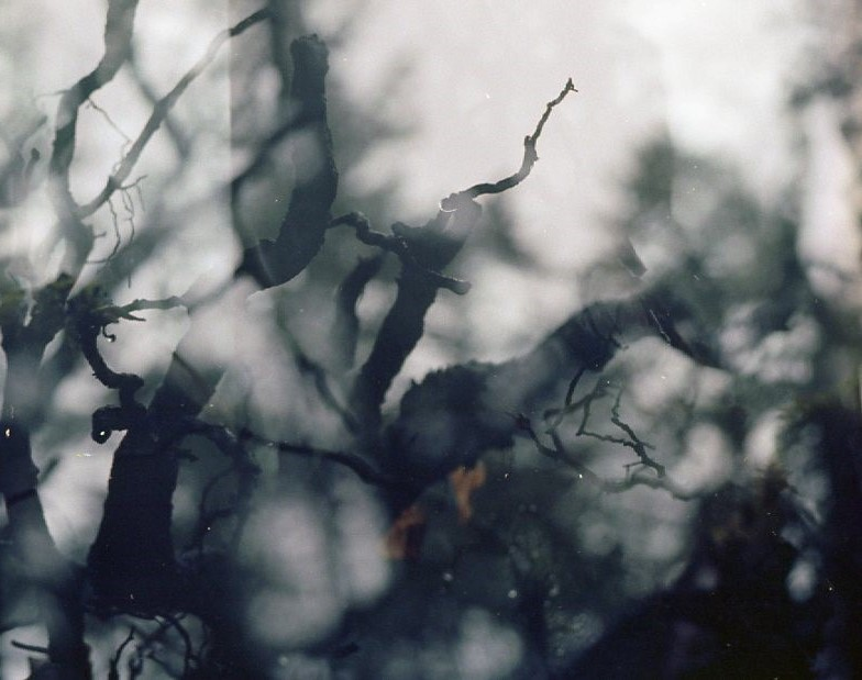 Fragmented | Pentax Super A | Ektar 100 | Vanessa Carson