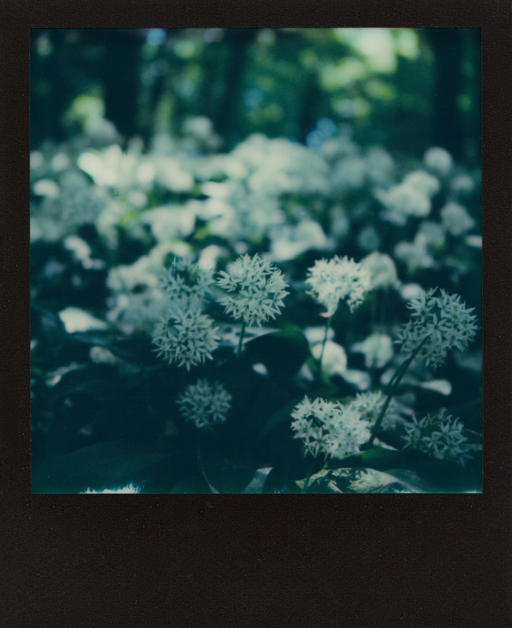Bärlauch | Polaroid SX-70 | Impossible Project Film | Ioana Taut