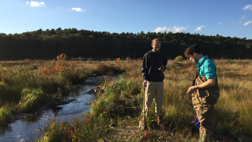 Checking the sensor nodes embedded in the wetland in Plymouth, MA in partnership with the nonprofit Living Observatory