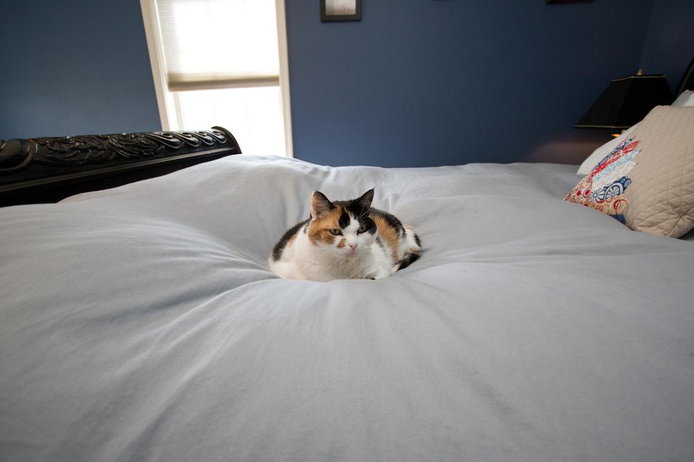 7fairfax_cat.jpg