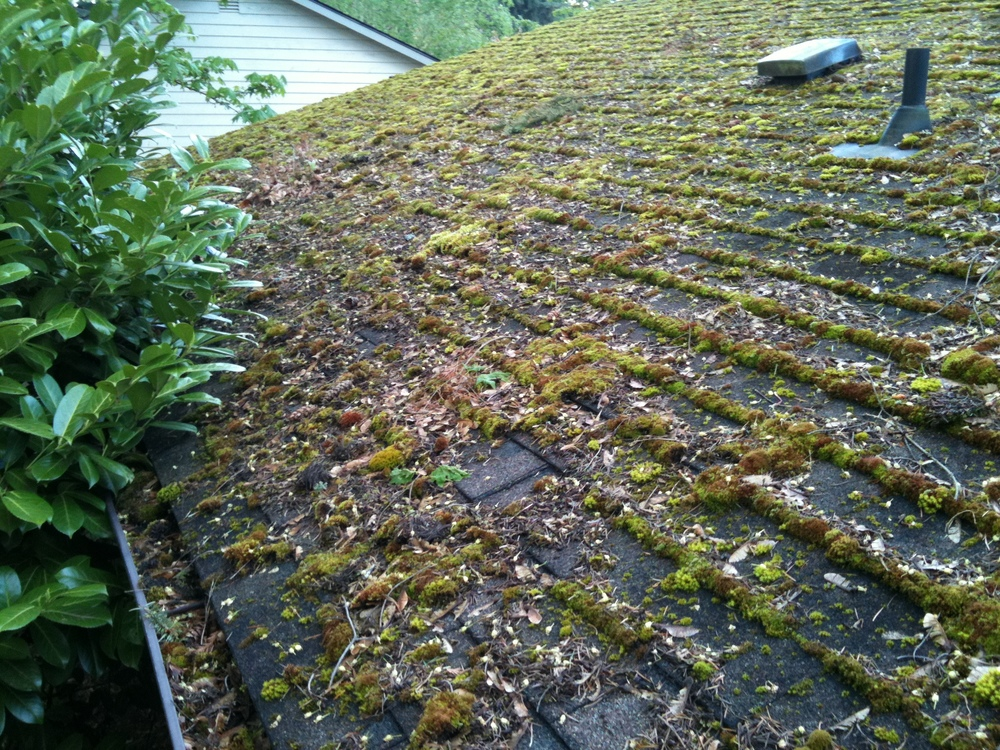 Before Roof Moss Treatment